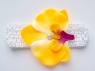 Цветок орхидея желтого цвета на повязке в сеточку.