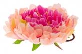 """Большой цветок """"Пион"""" нежного цвета на резинке."""