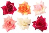 """Цветок """"Роза"""" на резинке."""